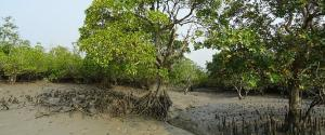 Restoring mangroves in west Africa a challenge, but UNEP shows the way