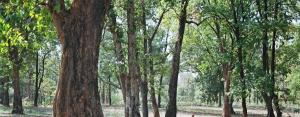 Nearly 500 ha forest land in protected areas diverted in 2019