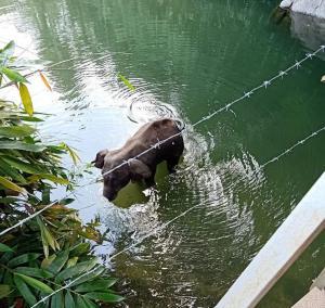 Avoiding tragic elephant deaths through policy intervention