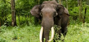 Conservationists slam draft of new government report on elephants