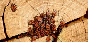The next invasion of insect pests will be discovered via social media