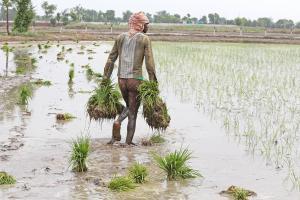 महामारी के वक्त कृषि क्षेत्र ने बनाई बढ़त, आर्थिक विकास में उद्योग से ज्यादा हिस्सेदारी