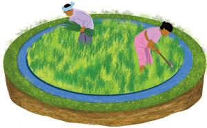 Zero-budget natural farming brought big gains for Andhra farmers, shows study