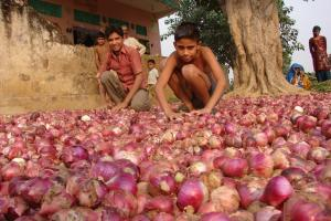 Onion crisis: 'High time Union govt invested in low-cost storage'