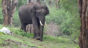 Nilgiris Elephant Corridor: SC upholds Madras HC order affirming animals' right of passage