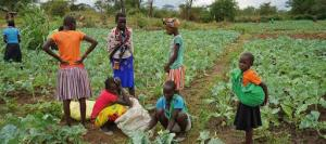 COVID-19: New UN alliance to stave off 'catastrophic food crisis'