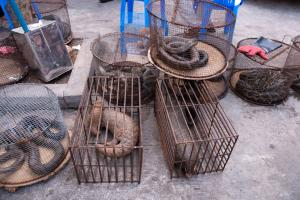 Animal group urges PM Modi: Raise wildlife trade ban issue in G20 meet
