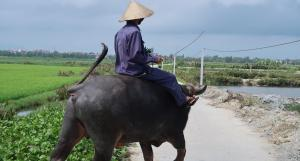 Vietnam is focusing on veterinary drug shops to tackle antimicrobial resistance