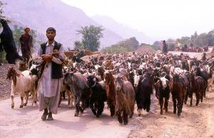 Why are nomads being evicted from Jammu and Kashmir?