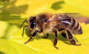 Why bees? Why honey?
