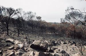 'I felt immense grief': A year on from bushfires, Australian scientists need mental health support