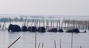Elephants destroy prawn farms, fishing boats in Odisha