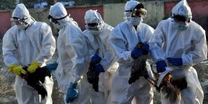 Kerala confirms bird flu after hundreds of ducks die