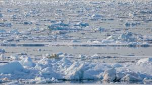 What can a bucket of water tell us about Arctic marine life? A lot, says a new study