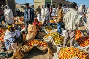Food and healthcare in war-torn Tigray: preliminary insights on what's at stake