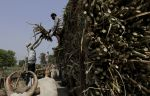 Sugar mills owe cane farmers Rs 18,143 crore