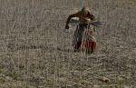 पूरे परिवार को तोड़ देती है आत्महत्या, महिला किसानों को गुजारनी पड़ती है विपदा की जिदंगी