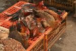 Bird flu spreads in West Africa; FAO alerts governments