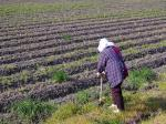 Women play vital role in agrifood systems across Latin America and the Caribbean