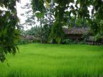 Indian research can help cut nitrogen fertiliser waste
