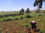 Agricultural mechanisation can be sustainable in sub-Saharan Africa