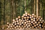 India is third largest importer of illegally-logged wood: IUFRO