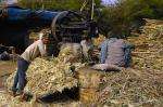 India's sugar output increases in December despite low production in several states