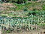 Using wastewater to grow crops can address water scarcity in agriculture