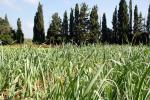 Agricultural transformation vital to produce 50% more food in 2050