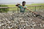 उष्णकटिबंधीय देशों से 30-58% मछली की प्रजातियां हो जाएंगी गायब