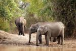 What's causing elephants in Karnataka, Tamil Nadu to die? Hunger and thirst