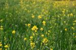 After Dave, what does future hold for GM Mustard?
