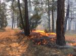 Scientists suggest early warning system for forest fires