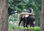 3,500 captive elephants are used to entertain tourists in India: Study