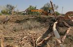 Rules to implement Compensatory Afforestation Fund Act to be finalised by January 3