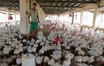 India's antibiotic use in animals to increase 82% by 2030