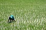 Agriculture key to creating jobs in India's largely informal economy