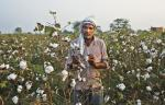 Why India continues to use lethal pesticides