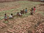Six villages in Odisha can now sell tendu leaves