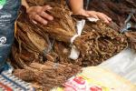 Tobacco hurts more than just your lungs – it damages the communities that grow it