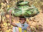 The income of tribal communities of Kalahandhi district, Odisha, increased three-fold once their right to sell tendu leaves to traders of their choice