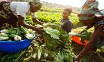 UN plans to double farmers' income in Africa in three years