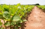 Illegal GM Soybean: Farmers' body demands CBI probe into GEAC inaction