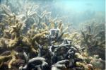 प्रवाल-भित्तियों को नष्ट कर रहे हैं समुद्री स्पंज