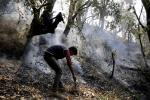 What's causing untimely forest fires in Kashmir? Prolonged dry spell
