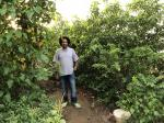 Building a forest in the heart of Karachi