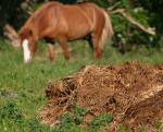 Livestock manure not so safe for food production