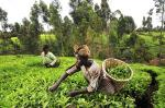 Kenyan farmers embrace new and sustainable way to build resilience