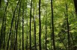 Uttar Pradesh grants 3 forest villages revenue status under FRA