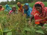 Climate change leads to bonded labour in Bangladesh